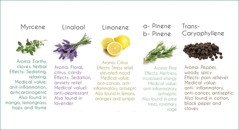 common-cannabis-terpenes
